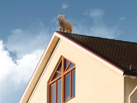 Обои Рыжий котенок на крыше