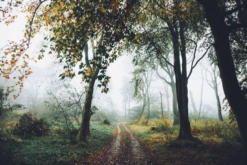 Обои Грунтовая дорога в густой туман, фотограф Daniel Casson