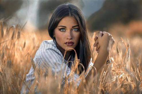 Обои Голубоглазая девушка в колосистом поле, фотограф jessica napolitano