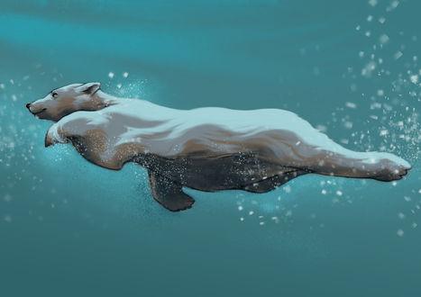 Обои Белый мишка под водой, by LumiLumi