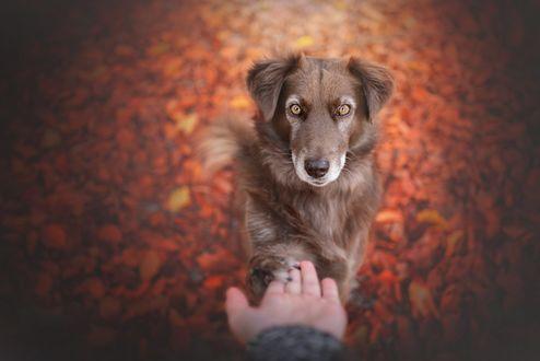 Обои Пес положил лапу на руку хозяина, фотограф Anne Geier