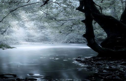 Обои Замершая река в зимнем лесу