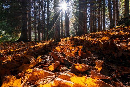 Обои На осенние листья падает солнечный свет, фотограф Adnan Bubalo