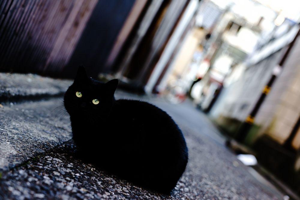 Обои для рабочего стола Черная кошка на улице города