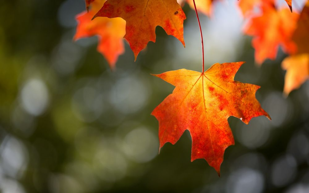 Обои для рабочего стола Осенние листья на фоне бликов