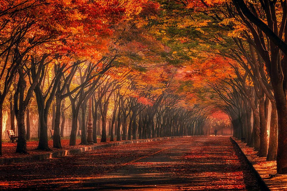 Обои для рабочего стола Дорога усыпана осенней листвой, фотограф c1113