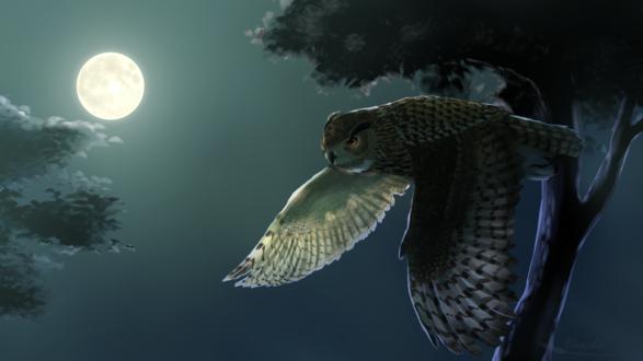 Обои Сова в полете на фоне ночного неба и полной луны, by Vanzkie