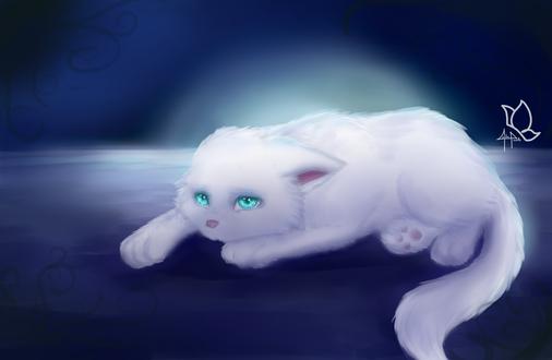 Обои Грустный белый кот, by BlackCakeArt