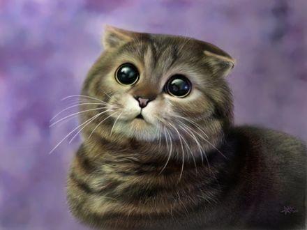 Обои Шотландская вислоухая кошка на сиреневом размытом фоне, by Vorchuniya