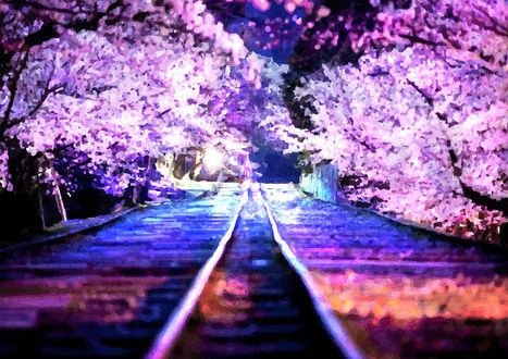 Обои Железнодорожные пути, вдоль которых цветет сакура
