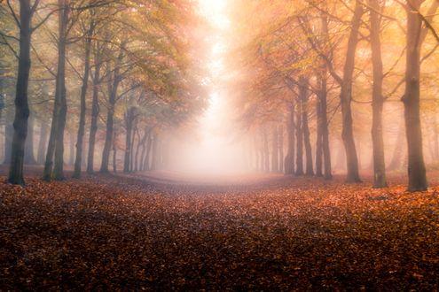 Обои Дорога усыпана осенней листвой