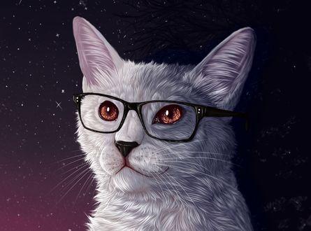 Обои Белый кот в очках
