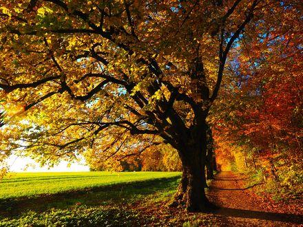 Обои Осенние деревья у поля