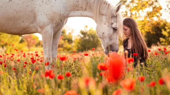 Обои Темноволосая девушка с белой лошадью на маковом поле, фотограф Manuel Schmidt