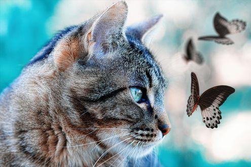 Обои Полосатый кот смотрит на бабочку