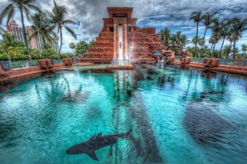 Обои Бассейн с акулами на фоне природы и отеля Атлантис, Нассау, Багамские острова
