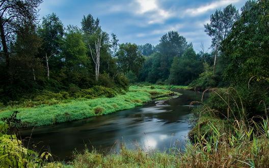 Обои Речка среди леса в Британской Колумбии, Канада / British Columbia, Canada
