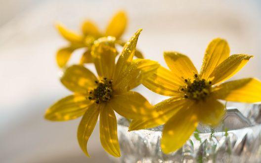 Обои Желтые цветы стоят в стеклянной вазе