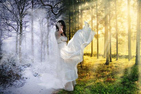 Обои Девушка в белом платье стоит в лесу на фоне природы в зимнее и летнее время года