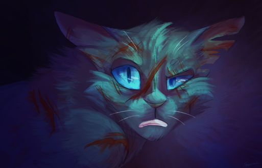 Обои Stonefur / Камень из серии романов Коты-Воители / Cats-Warriors, by Speedienth