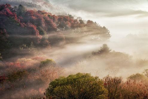 Обои Осенний лес, туман и свет, фотограф c1113