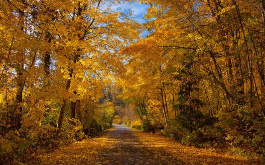 Обои Дорога с осенними листьями в kokanee Creek provincial park in British Сolumbia / провинциальном парке Кокани-Крик в Британской Колумбии, фотограф SandyK29