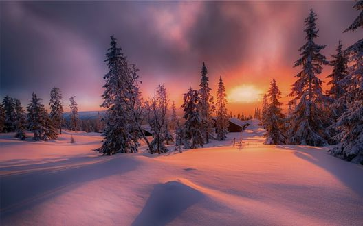 Обои Красный закат зимой над деревней и елками, фотограф Jоrn Allan Pedersen