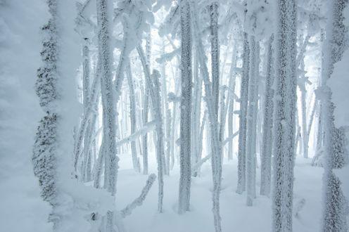 Обои Замерзшие ветки в снегу и инее