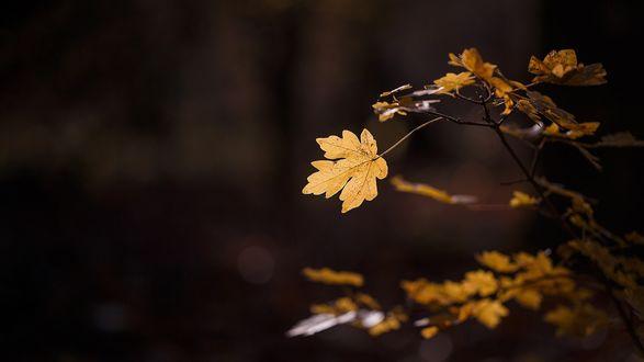 Обои Веточка с осенними листьями