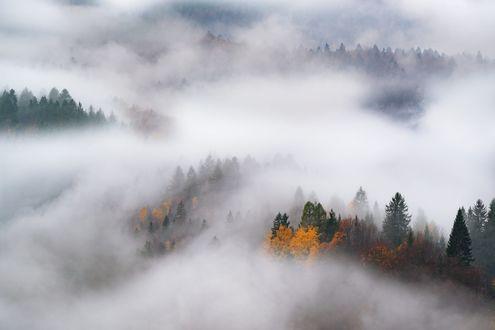 Обои Осенний лес в густом тумане, фотограф Adnan Bubalo