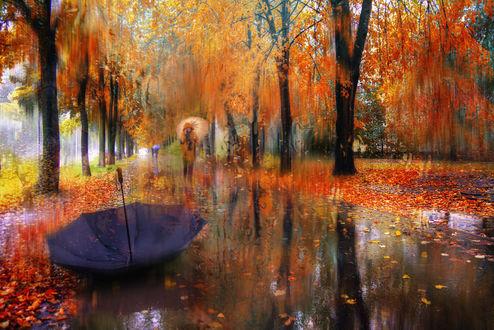 Обои Осенний дождливый Санкт-Петербург, фотограф Ed Gordeev