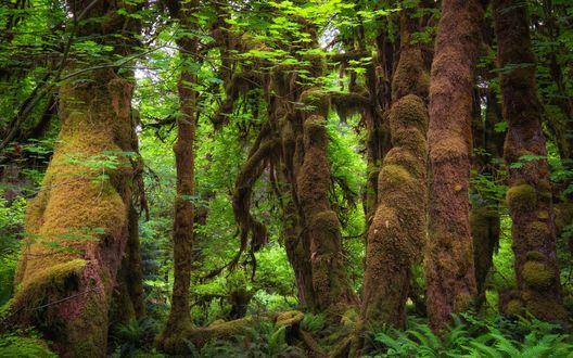 Обои Тропический зеленый лес