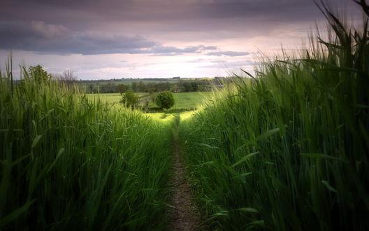 Обои Дорожка в поле