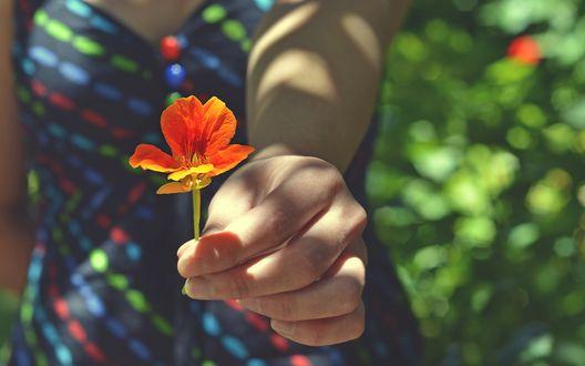 Обои Девушка держит в руке цветок