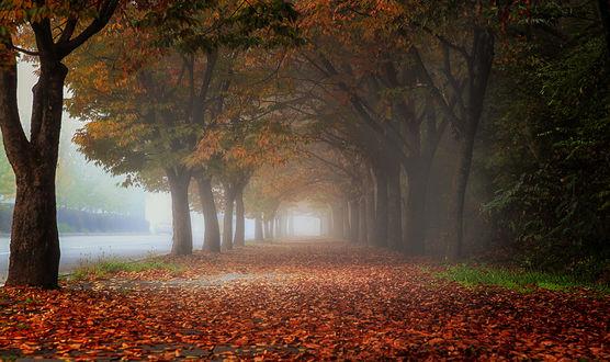 Обои Дорога в осенней листве, фотограф c1113