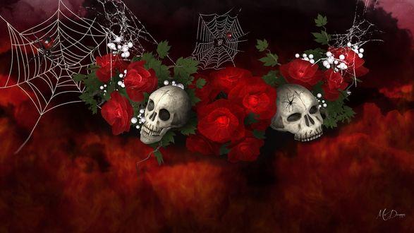 Обои Черепа, красные розы и паутина, by MaDonna