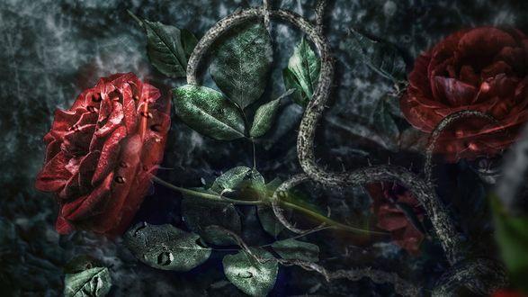 Обои Красные розы и вьюны на каменной стене