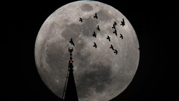 Обои Шпиль собора и птицы на фоне полной луны
