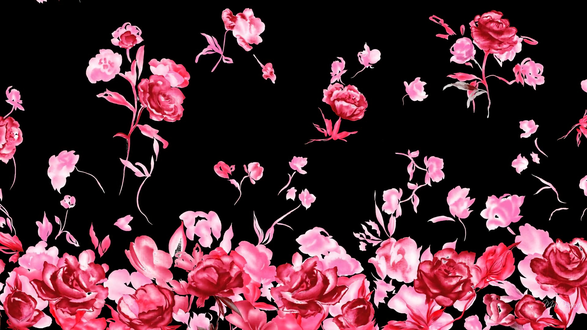 Обои Розово-красные розы на черном фоне