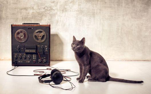 Обои Русско-голубая кошка сидит рядом с наушниками и старой магнитолой