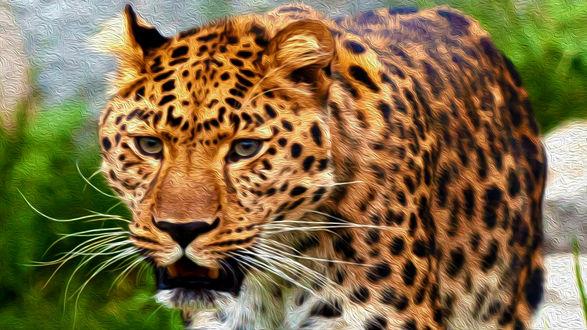 Обои Леопард идет на фоне природы