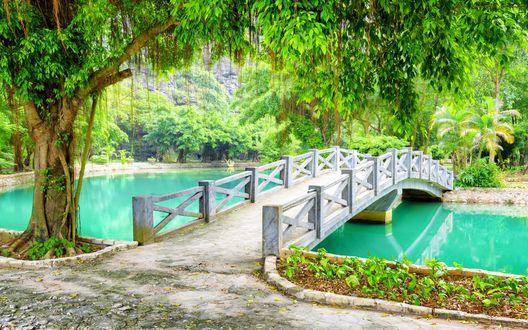 Обои Большое дерево растущее у мостика в парке, провинция Ninh Binh / Нянь Бинь, Вьетнам