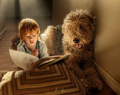 Обои Мальчик с книгой рядом с собакой, фотограф Adrian C. Murray