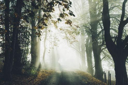 Обои Дорога в туманный лес, фотограф Daniel Casson