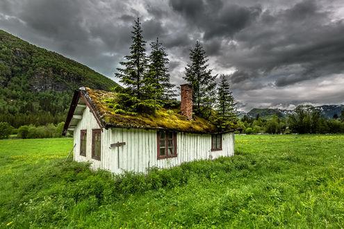 Обои Деревья на крыше заброшенного дома, фотограф Europe Trotter
