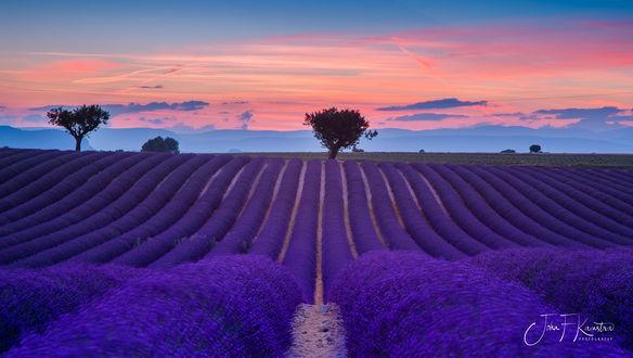 Обои Лавандовое поле на закате, фотограф John Kamstra