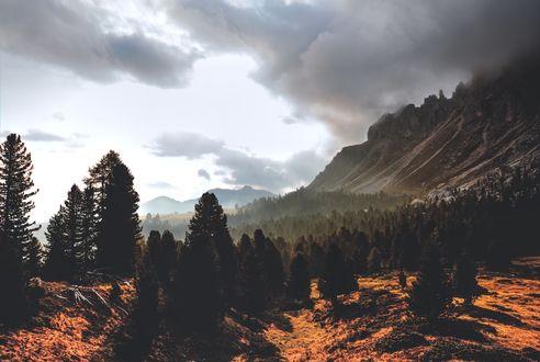 Обои Деревья и горные склоны под облачным небом