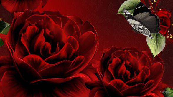 Обои Красные пионы и бабочка