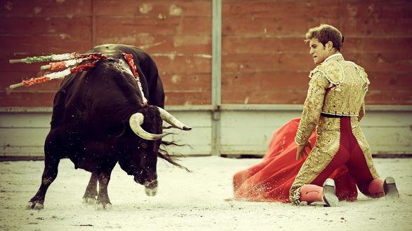 Обои Бой тореадора и быка
