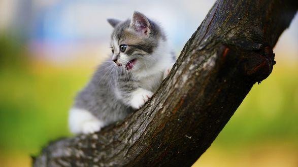 Обои Котенок на дереве